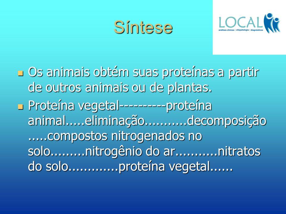 Síntese Os animais obtém suas proteínas a partir de outros animais ou de plantas.