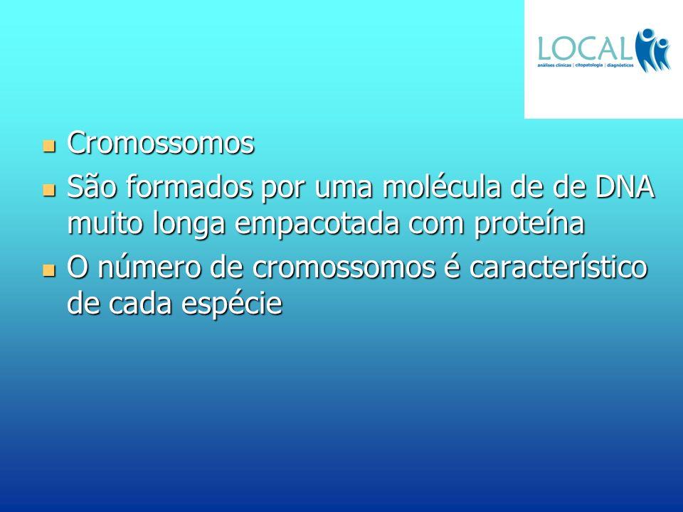 Cromossomos São formados por uma molécula de de DNA muito longa empacotada com proteína.