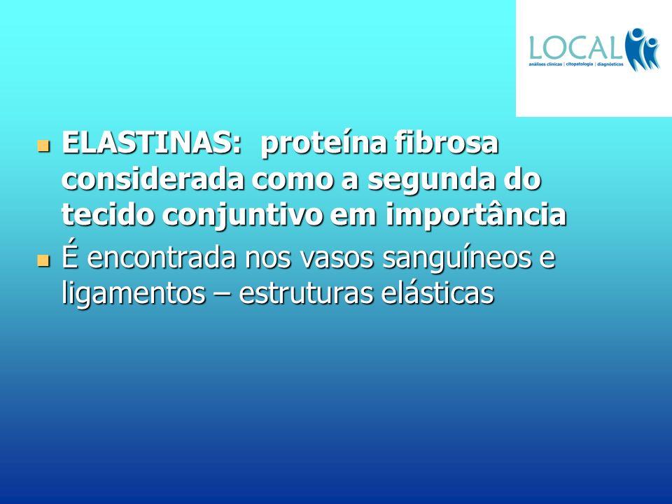 ELASTINAS: proteína fibrosa considerada como a segunda do tecido conjuntivo em importância