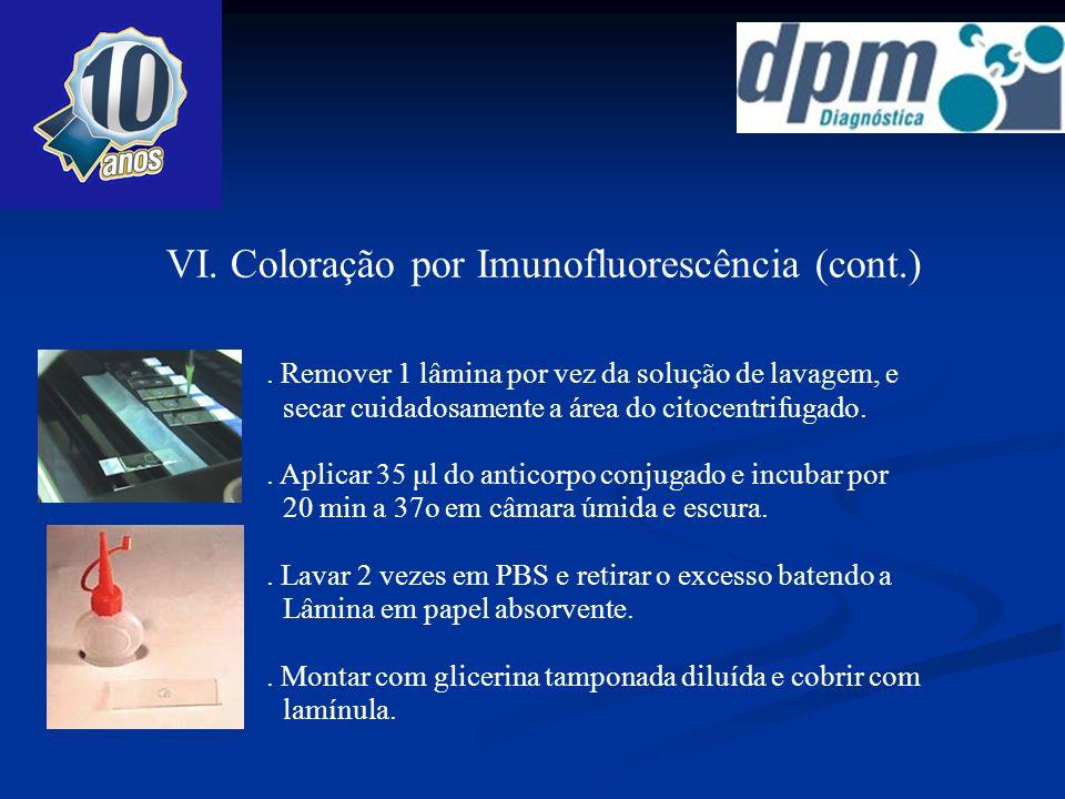 VI. Coloração por Imunofluorescência (cont.)