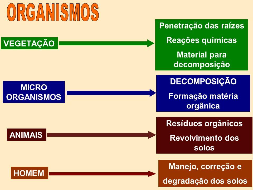 ORGANISMOS Penetração das raízes Reações químicas