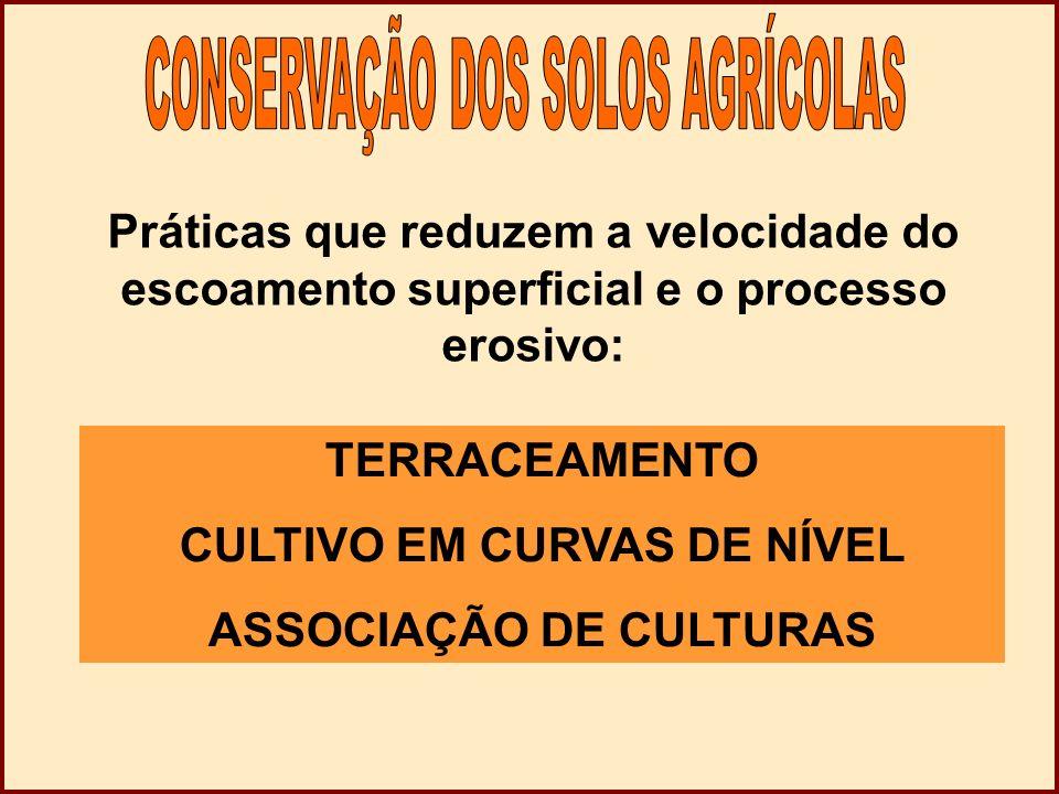 CULTIVO EM CURVAS DE NÍVEL ASSOCIAÇÃO DE CULTURAS
