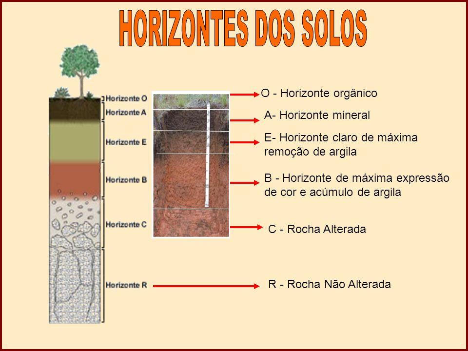 HORIZONTES DOS SOLOS O - Horizonte orgânico A- Horizonte mineral