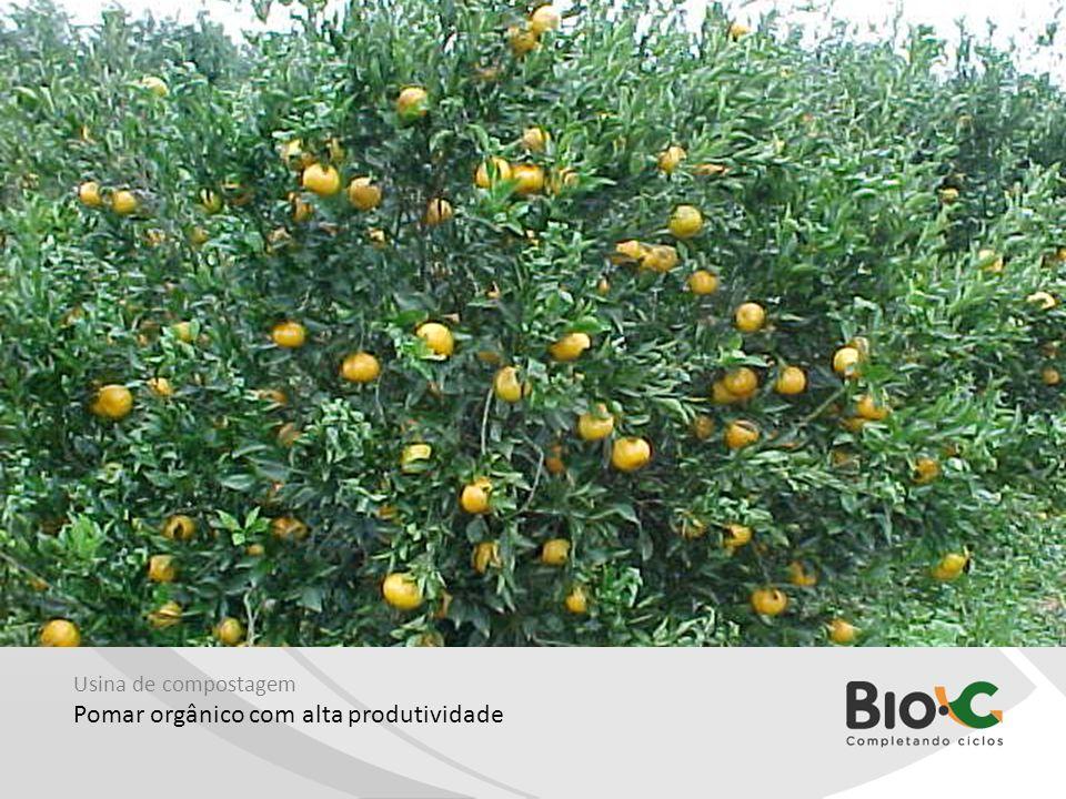 Pomar orgânico com alta produtividade