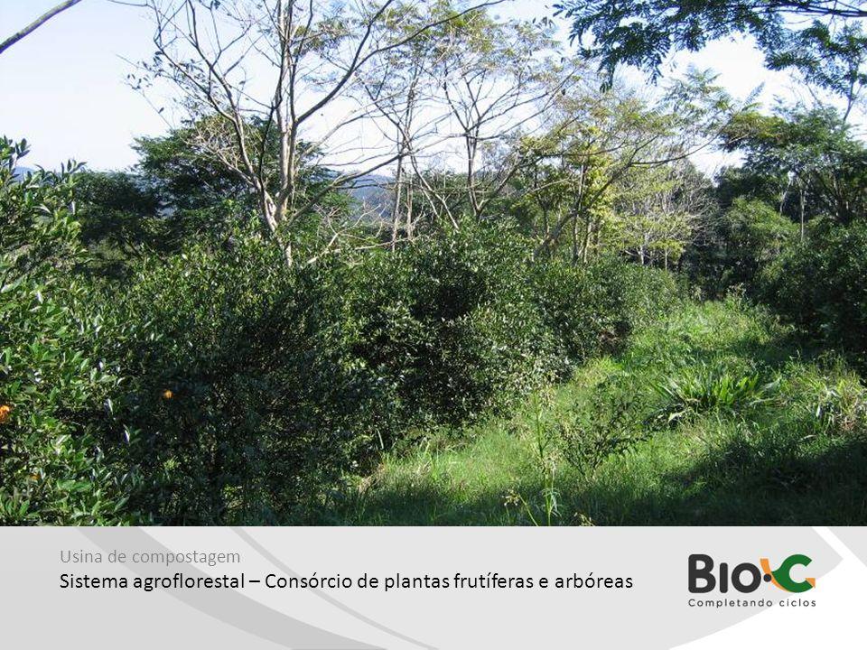 Sistema agroflorestal – Consórcio de plantas frutíferas e arbóreas