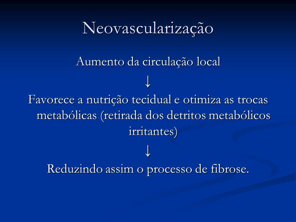 Neovascularização Aumento da circulação local ↓