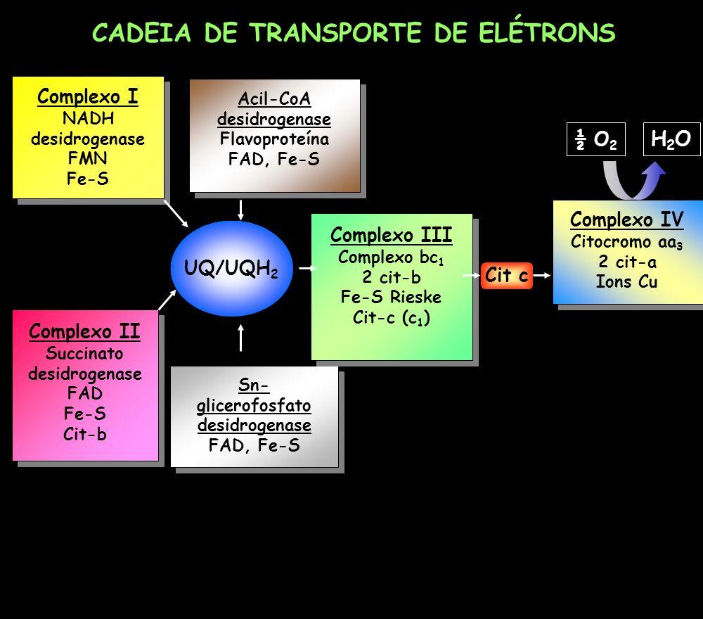 CADEIA DE TRANSPORTE DE ELÉTRONS