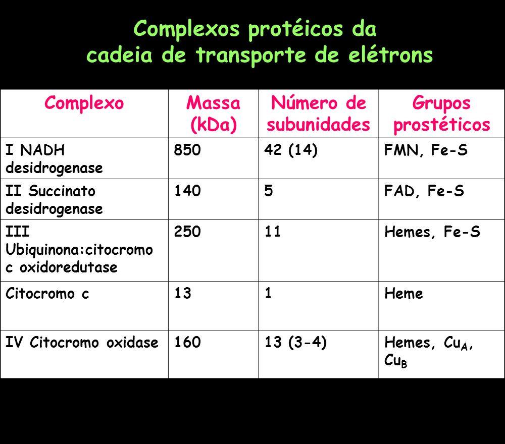 Complexos protéicos da cadeia de transporte de elétrons