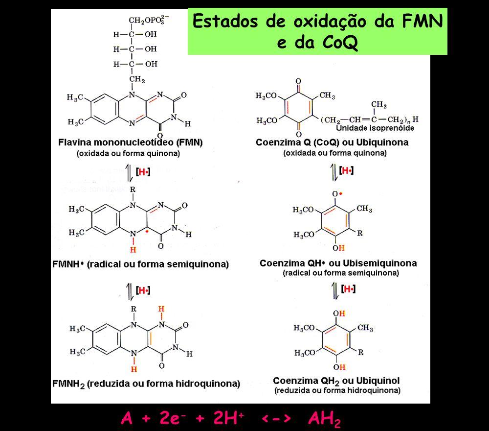 Estados de oxidação da FMN