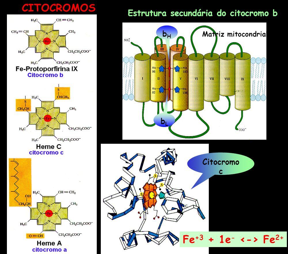 CITOCROMOS Fe+3 + 1e- <-> Fe2+