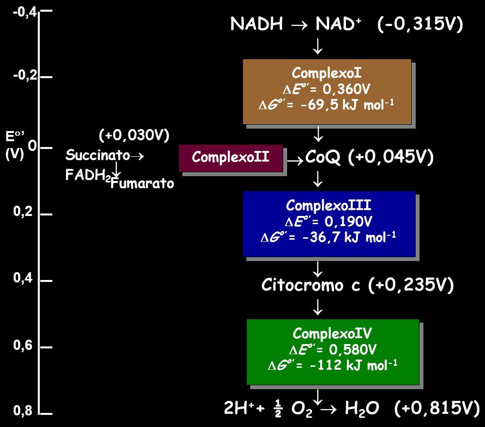 NADH  NAD+ (-0,315V)   CoQ (+0,045V)     Citocromo c (+0,235V)