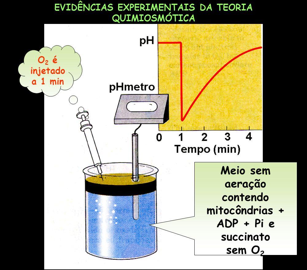 EVIDÊNCIAS EXPERIMENTAIS DA TEORIA QUIMIOSMÓTICA