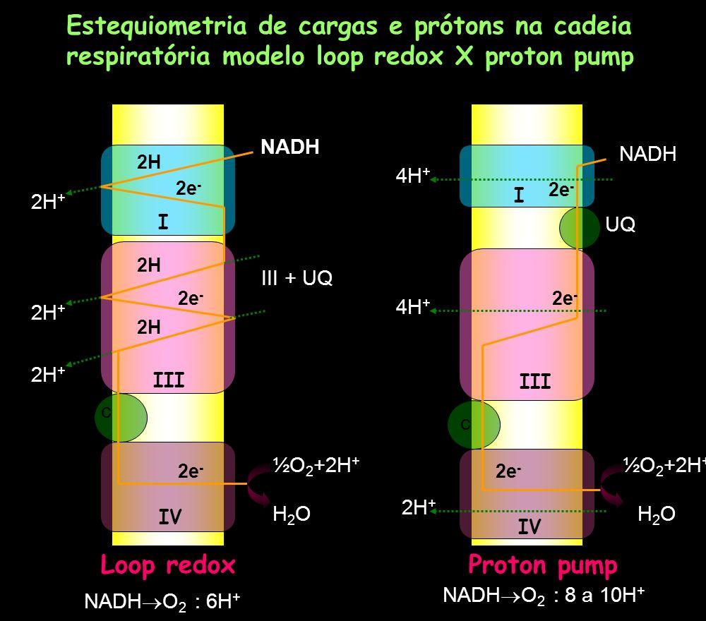 Estequiometria de cargas e prótons na cadeia