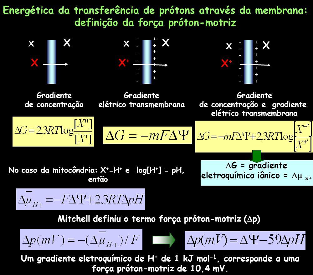 Energética da transferência de prótons através da membrana:
