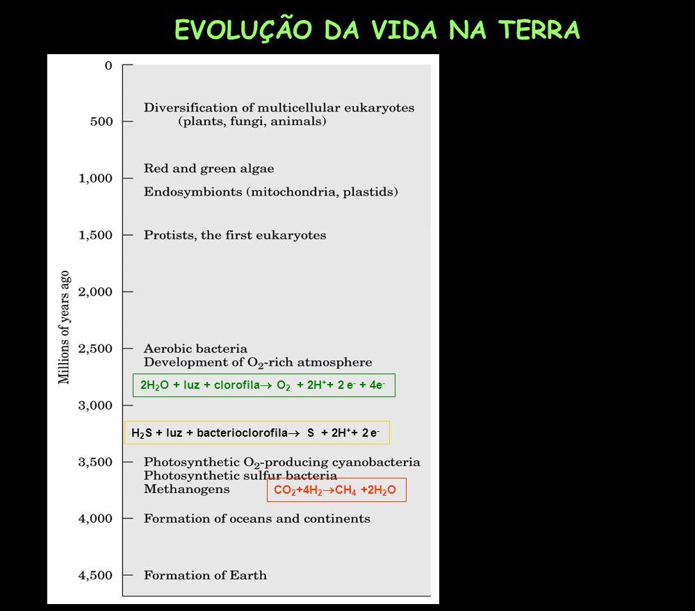 EVOLUÇÃO DA VIDA NA TERRA