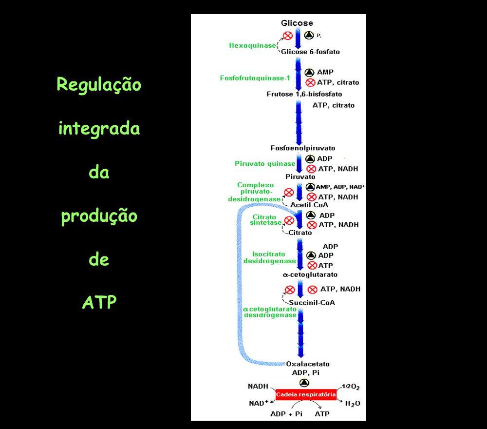 Regulação integrada da produção de ATP