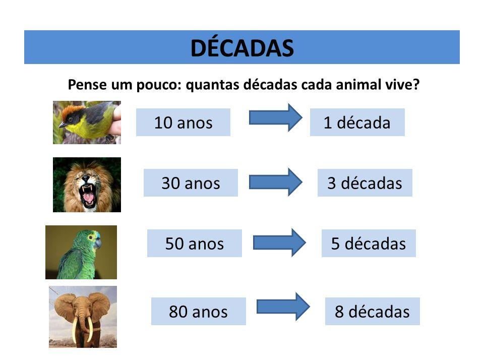 Pense um pouco: quantas décadas cada animal vive
