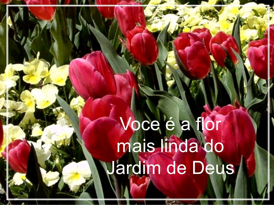 Voce é a flor mais linda do Jardim de Deus