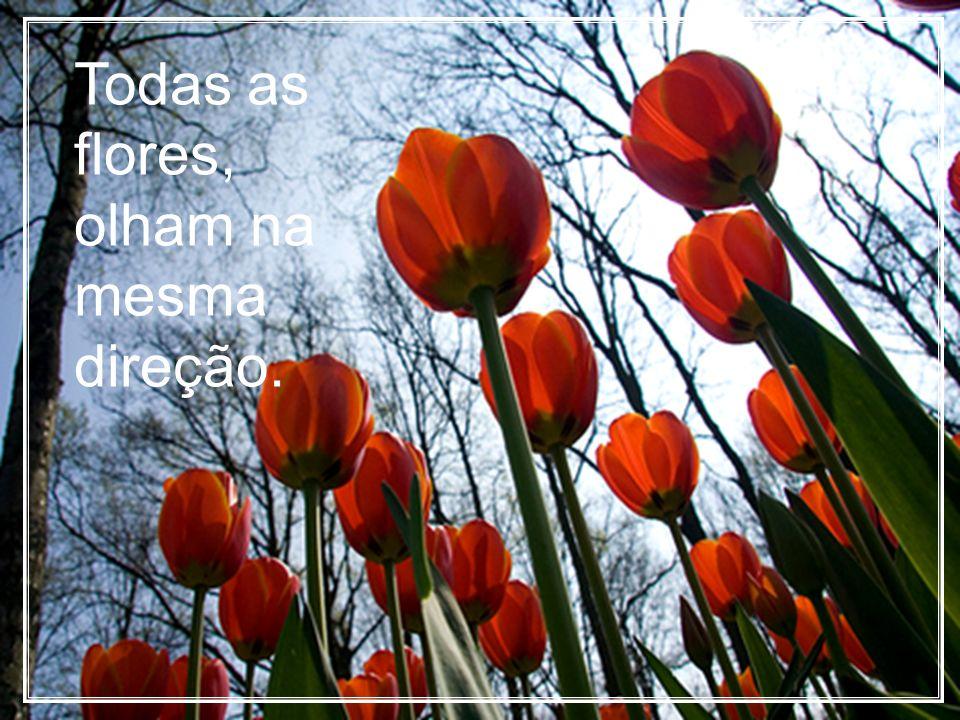 Todas as flores, olham na mesma direção.
