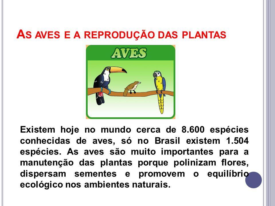 As aves e a reprodução das plantas