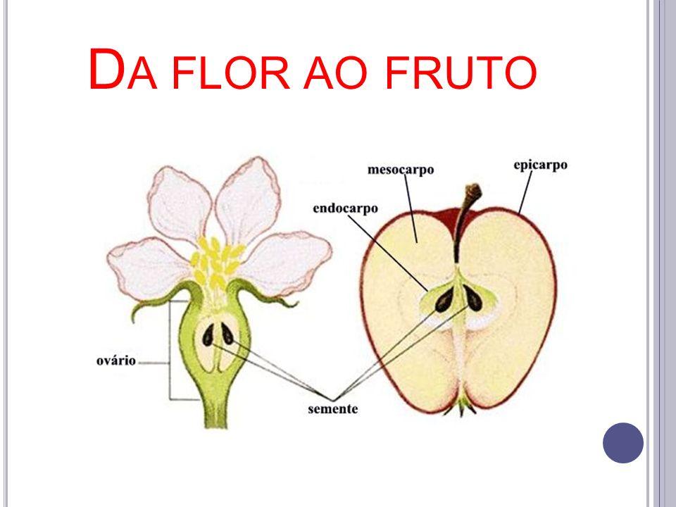 Da flor ao fruto