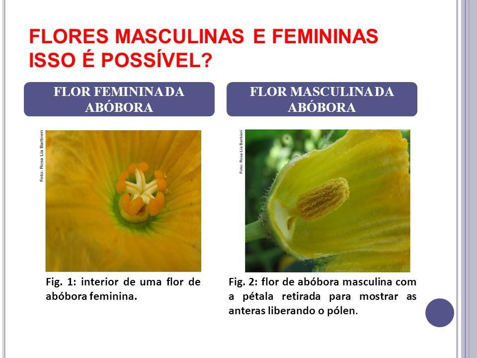 FLORES MASCULINAS E FEMININAS ISSO É POSSÍVEL