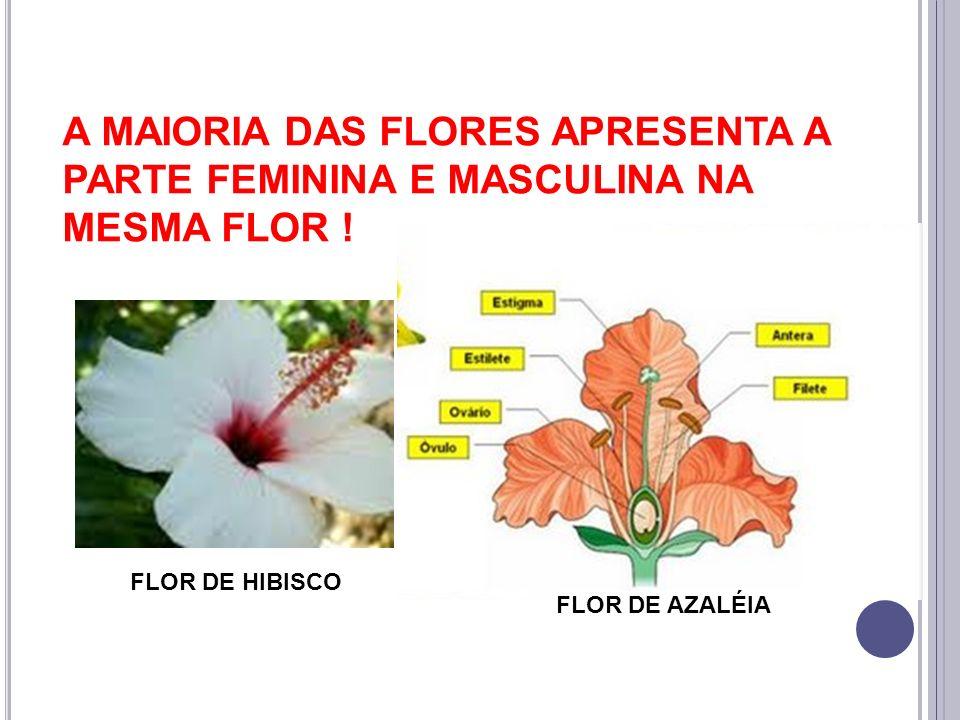 A MAIORIA DAS FLORES APRESENTA A PARTE FEMININA E MASCULINA NA MESMA FLOR !