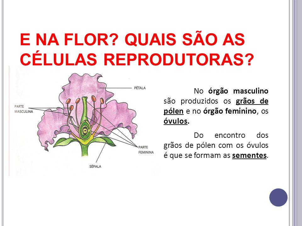 E NA FLOR QUAIS SÃO AS CÉLULAS REPRODUTORAS