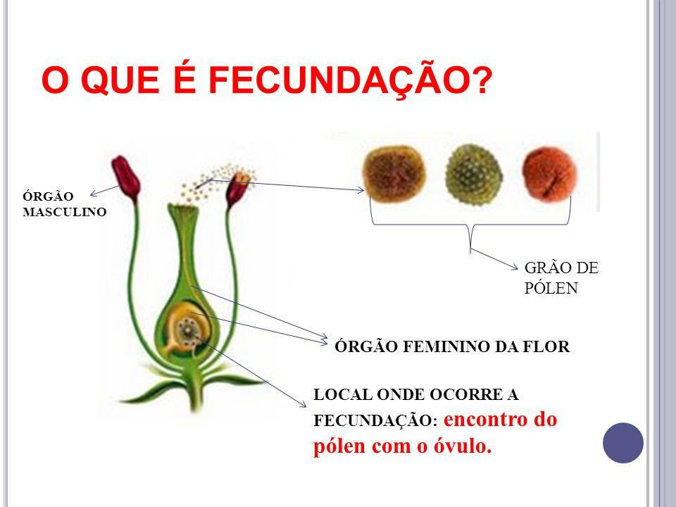 O QUE É FECUNDAÇÃO GRÃO DE PÓLEN ÓRGÃO FEMININO DA FLOR