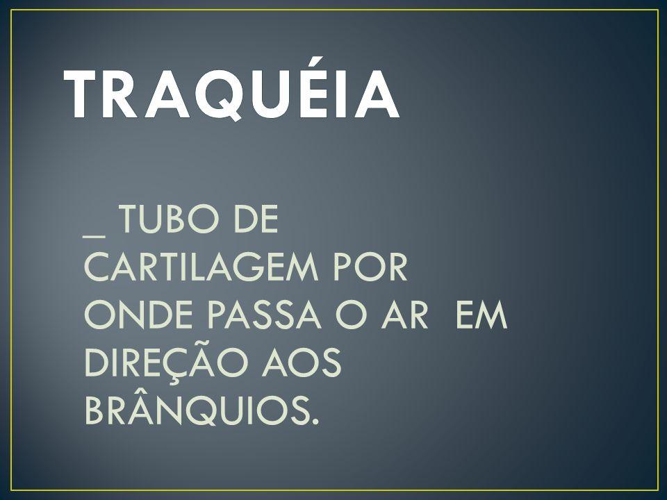 TRAQUÉIA _ TUBO DE CARTILAGEM POR ONDE PASSA O AR EM DIREÇÃO AOS BRÂNQUIOS.