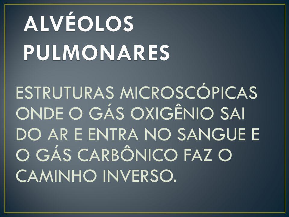 ALVÉOLOS PULMONARES ESTRUTURAS MICROSCÓPICAS ONDE O GÁS OXIGÊNIO SAI DO AR E ENTRA NO SANGUE E O GÁS CARBÔNICO FAZ O CAMINHO INVERSO.