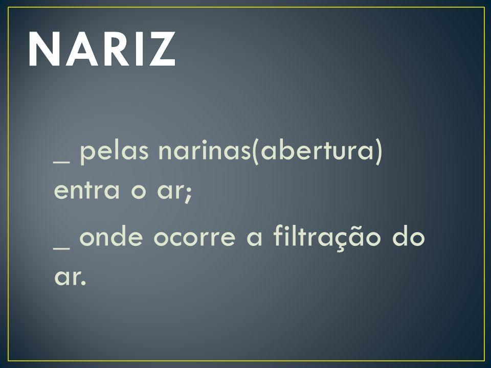 NARIZ _ pelas narinas(abertura) entra o ar; _ onde ocorre a filtração do ar.
