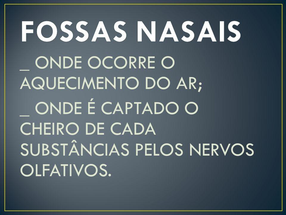 FOSSAS NASAIS _ ONDE OCORRE O AQUECIMENTO DO AR; _ ONDE É CAPTADO O CHEIRO DE CADA SUBSTÂNCIAS PELOS NERVOS OLFATIVOS.