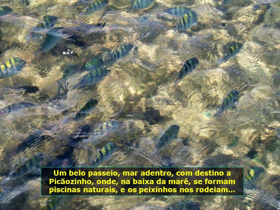 Um belo passeio, mar adentro, com destino a Picãozinho, onde, na baixa da maré, se formam piscinas naturais, e os peixinhos nos rodeiam…