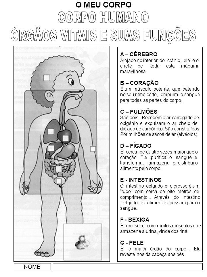 ÓRGÃOS VITAIS E SUAS FUNÇÕES