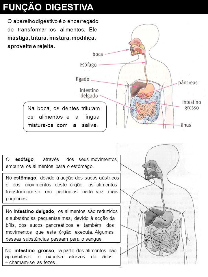 FUNÇÃO DIGESTIVA O aparelho digestivo é o encarregado
