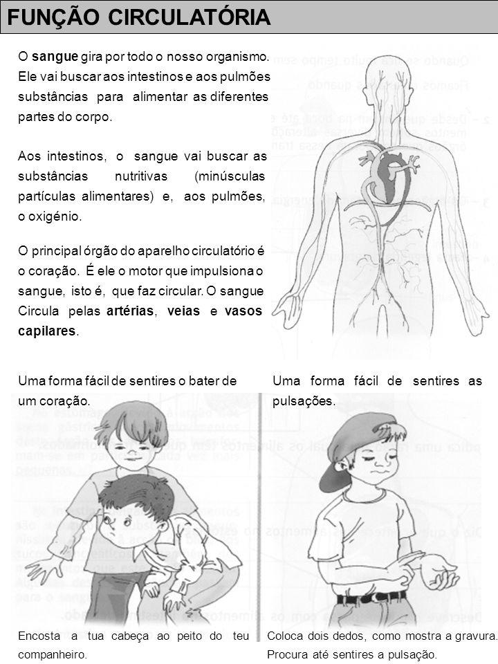 FUNÇÃO CIRCULATÓRIA O sangue gira por todo o nosso organismo.
