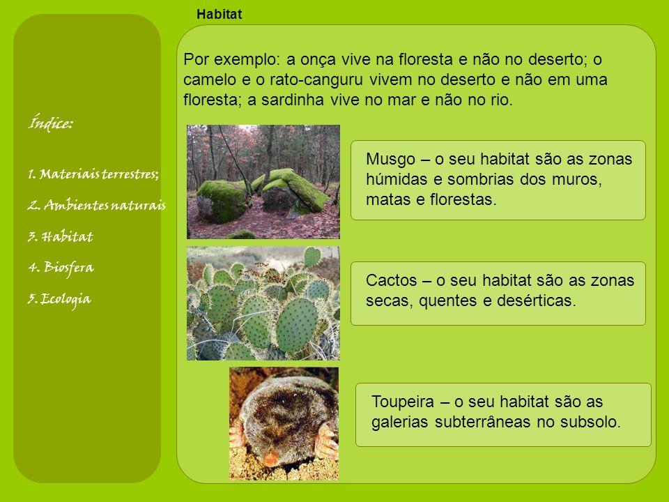 Musgo – o seu habitat são as zonas húmidas e sombrias dos muros,