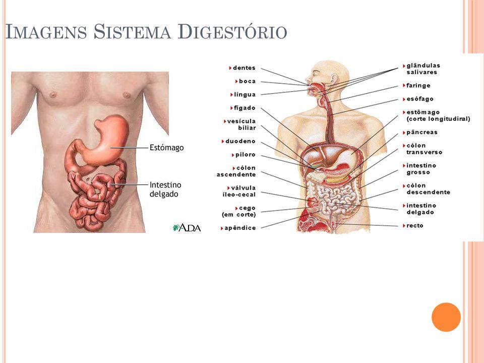 Imagens Sistema Digestório