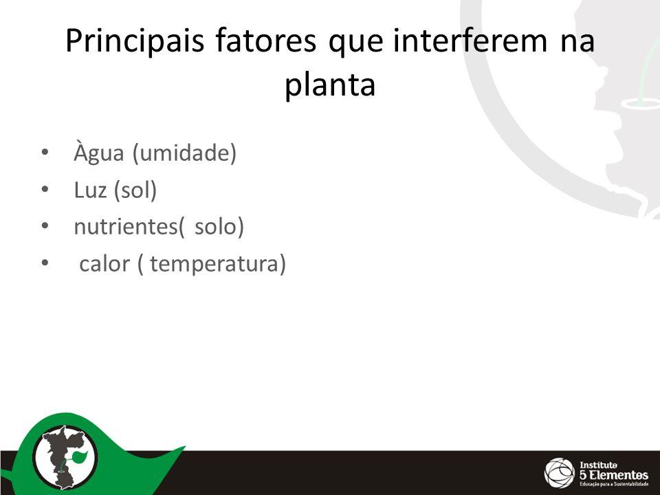 Principais fatores que interferem na planta