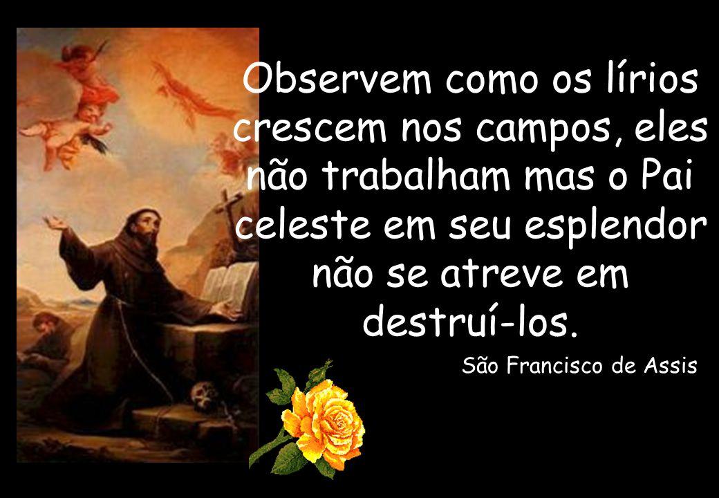 Observem como os lírios crescem nos campos, eles não trabalham mas o Pai celeste em seu esplendor não se atreve em destruí-los.