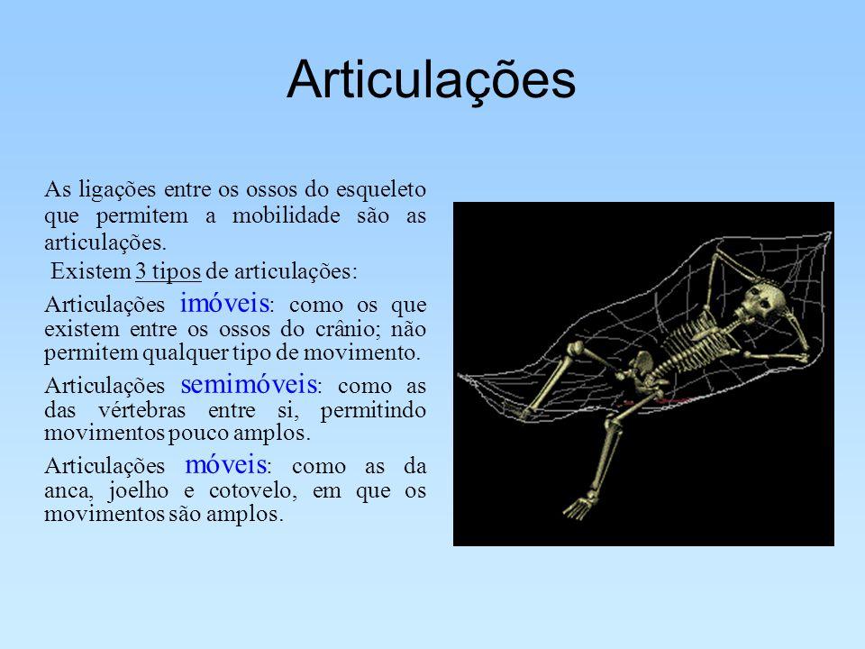 Articulações As ligações entre os ossos do esqueleto que permitem a mobilidade são as articulações.