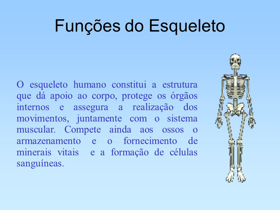 Funções do Esqueleto