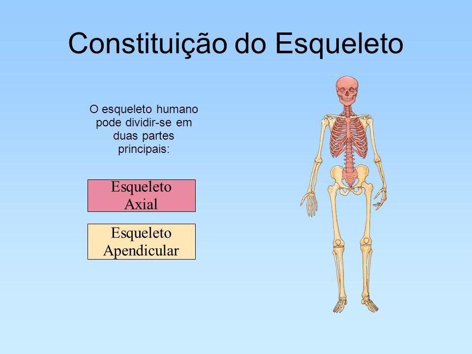 Constituição do Esqueleto