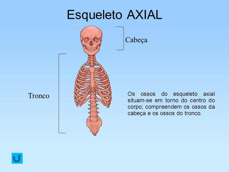 Esqueleto AXIAL Cabeça Tronco