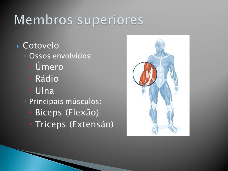 Membros superiores Úmero Rádio Ulna Biceps (Flexão) Triceps (Extensão)