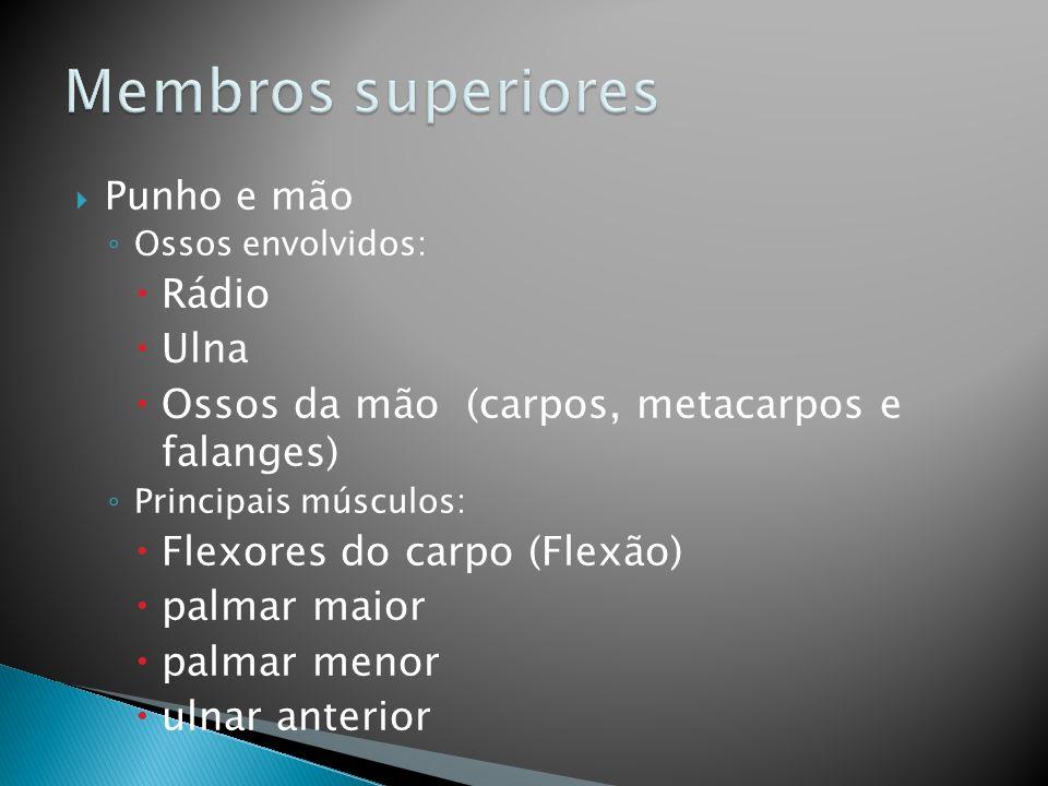Membros superiores Rádio Ulna