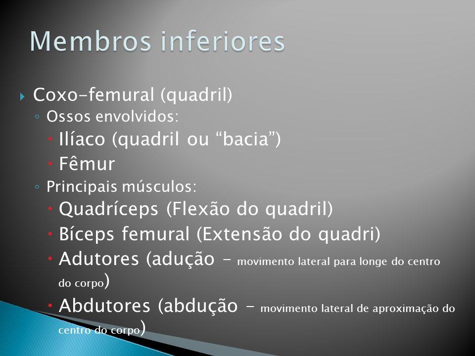 Membros inferiores Ilíaco (quadril ou bacia ) Fêmur