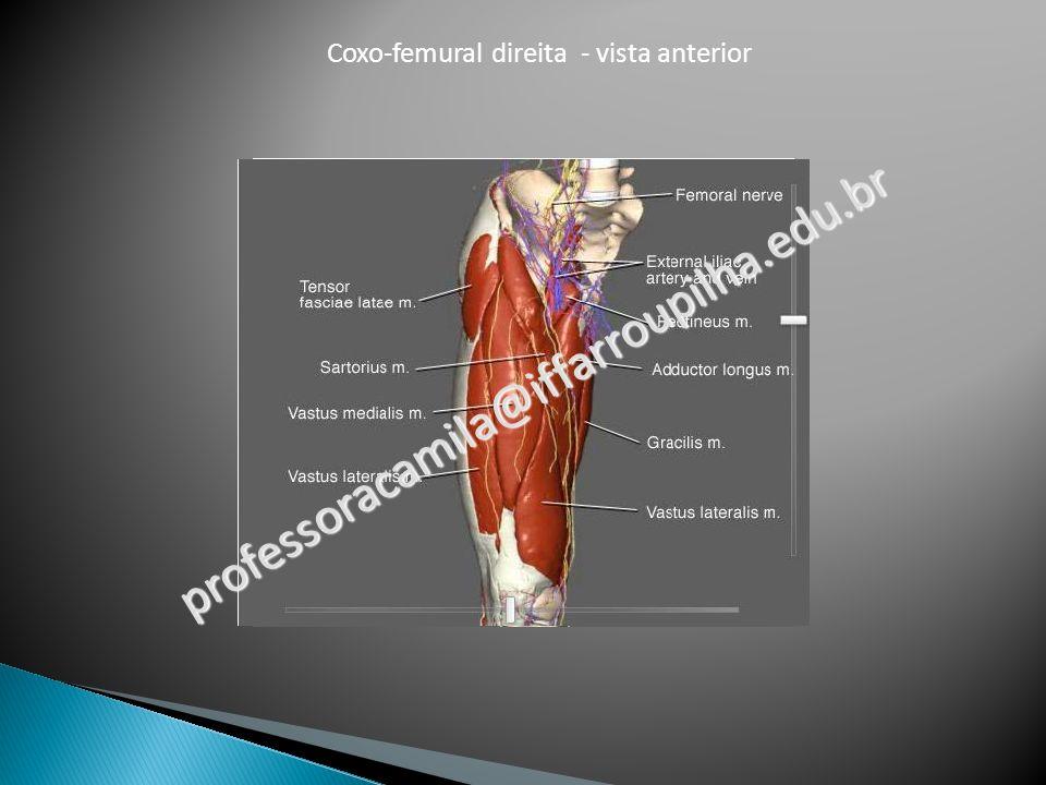 Coxo-femural direita - vista anterior