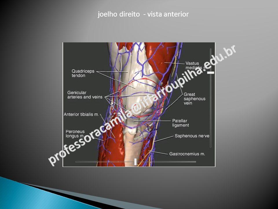 joelho direito - vista anterior